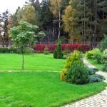 Лиственные и хвойные деревья - элементы ландшафтного дизайна